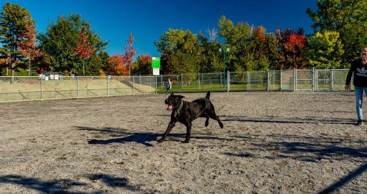 Réouverture des parcs canins et nettoyage des aires de jeux en vue d'une ouverture graduelle